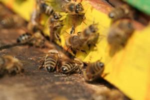 buzz-air-london-urban-beekeeping-takes-off_14411